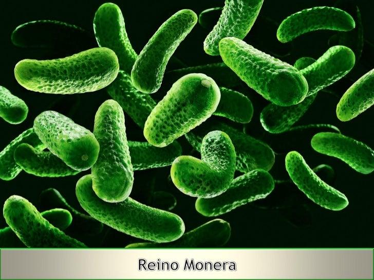 Autotrofos fotosinteticos y quimiosinteticos 67