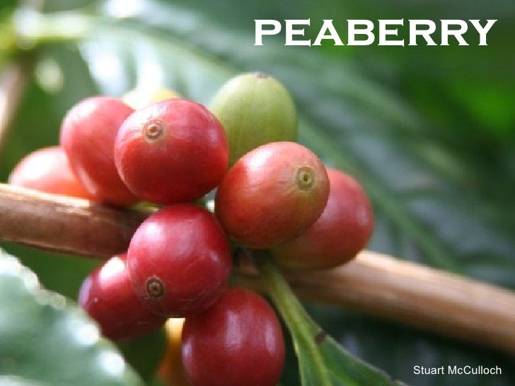 peaberry Stuart McCulloch