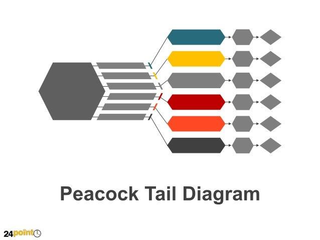 Peacock Tail Diagram
