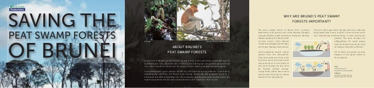 Saving the peat swamp forests of Brunei