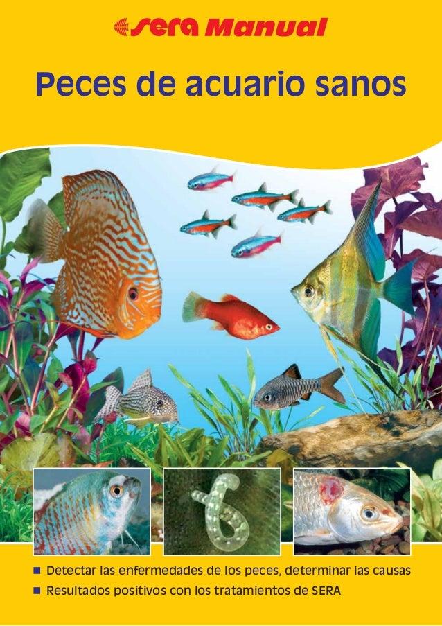 Peces de acuario sanos for Peces ornamentales para acuarios
