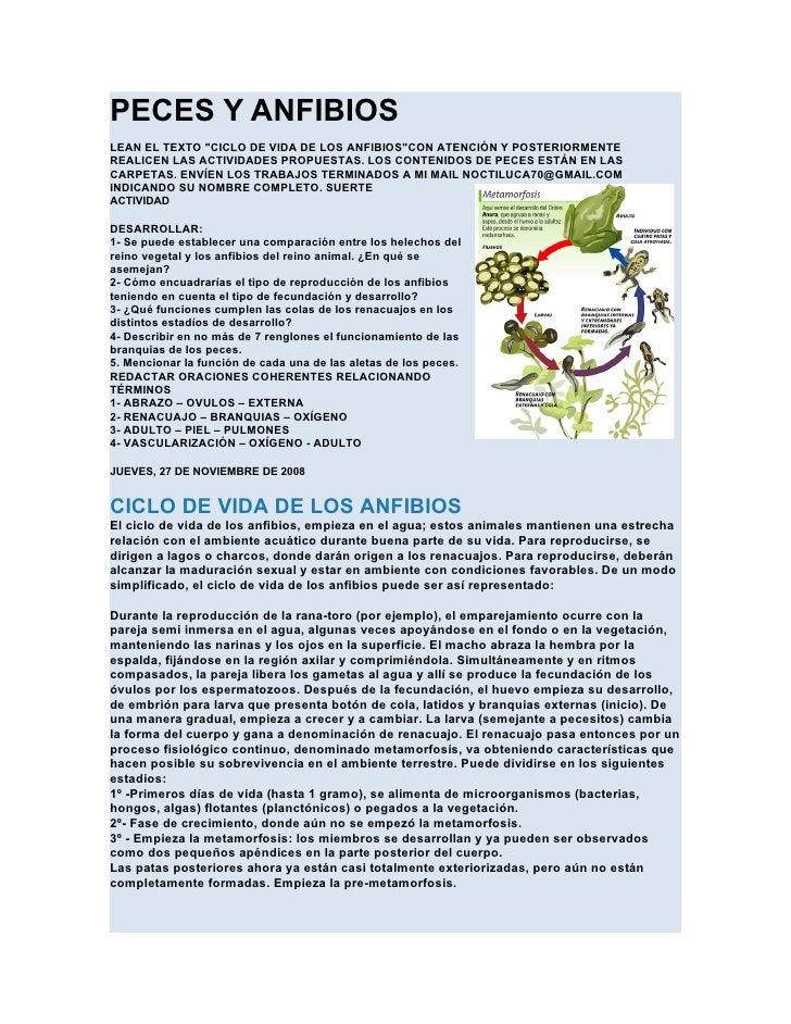 """PECES Y ANFIBIOSLEAN EL TEXTO """"CICLO DE VIDA DE LOS ANFIBIOS""""CON ATENCIÓN Y POSTERIORMENTEREALICEN LAS ACTIVIDADES PROPUES..."""