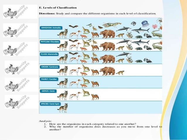 different lion species