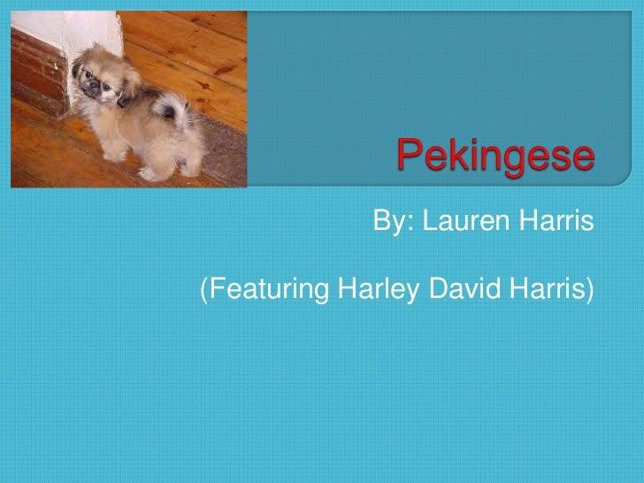 By: Lauren Harris(Featuring Harley David Harris)