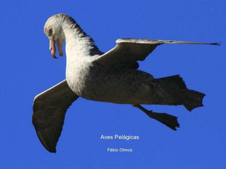 Aves Pelágicas Fábio Olmos