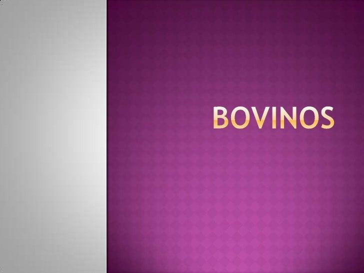 Bovinos <br />
