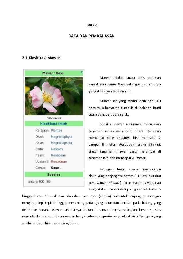 Contoh Teks Laporan Hasil Observasi Tentang Bunga Melati Dapatkan Contoh