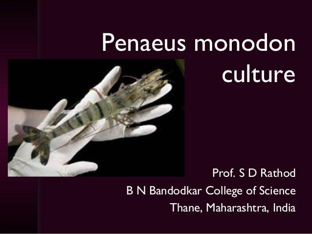 Penaeus monodon          culture                 Prof. S D Rathod  B N Bandodkar College of Science         Thane, Maharas...