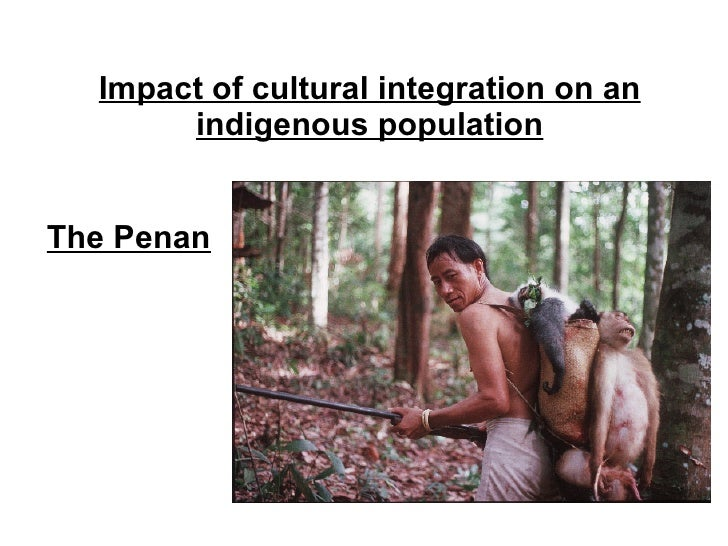 Impact of cultural integration on an indigenous population The Penan
