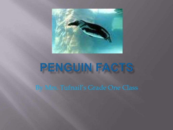 Penguin Facts<br />By Mrs. Tufnail's Grade One Class<br />