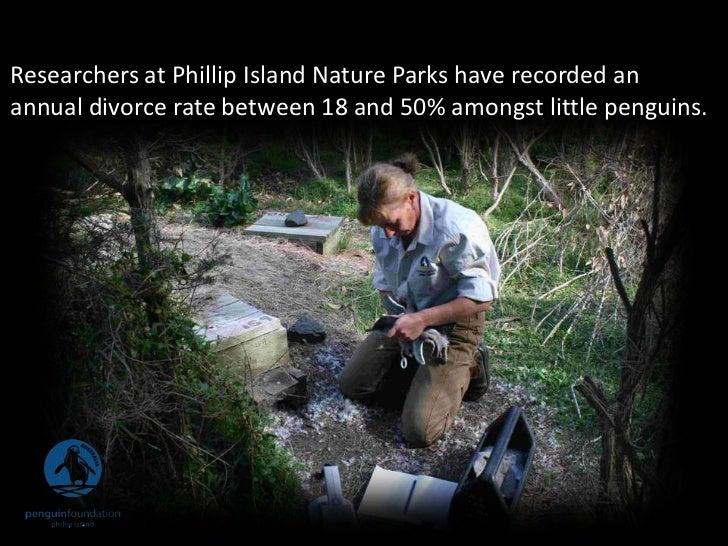 Phillip Island Penguins Facts