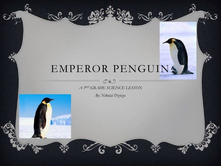 A 3RD GRADE SCIENCE LESSON<br />By: Nikolai Dziezyc <br />EMPEROR PENGUIN <br />
