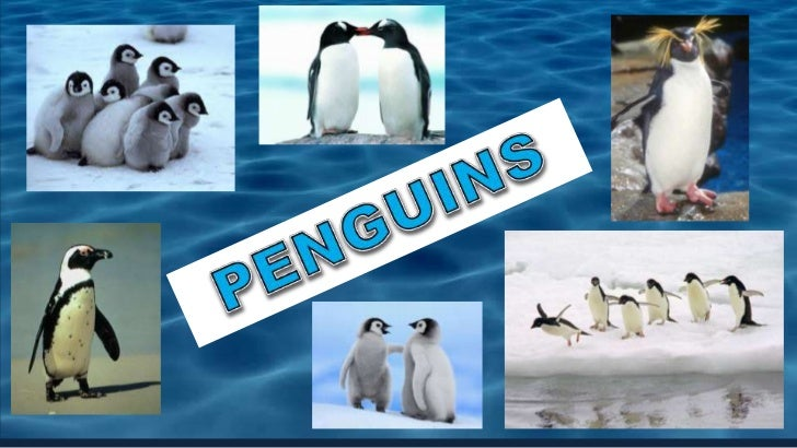 PENGUINS<br />