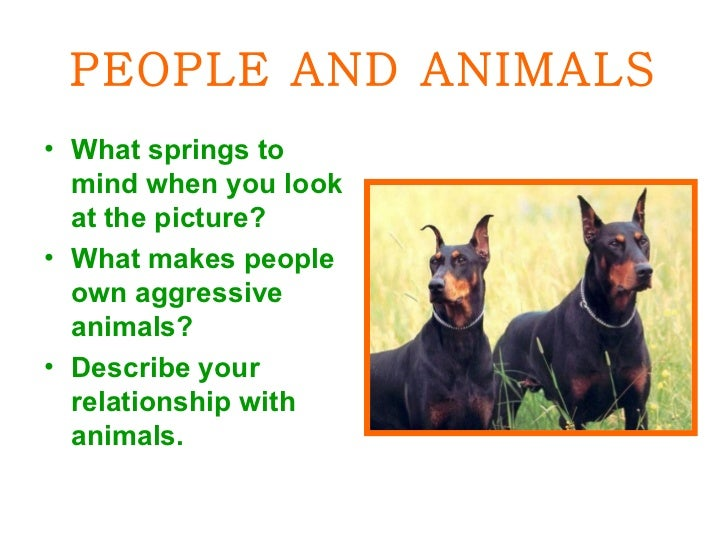 PEOPLE AND ANIMALS <ul><li>What springs to mind when you look at the picture? </li></ul><ul><li>What makes people own aggr...