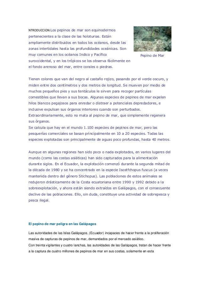 NTRODUCCION:Los pepinos de mar son equinodermos pertenecientes a la clase de las holoturias. Están ampliamente distribuido...
