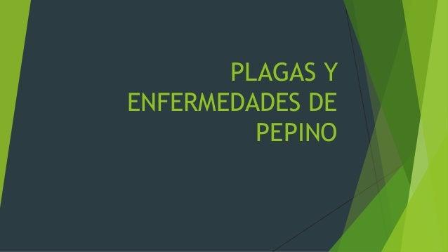 PLAGAS Y ENFERMEDADES DE PEPINO