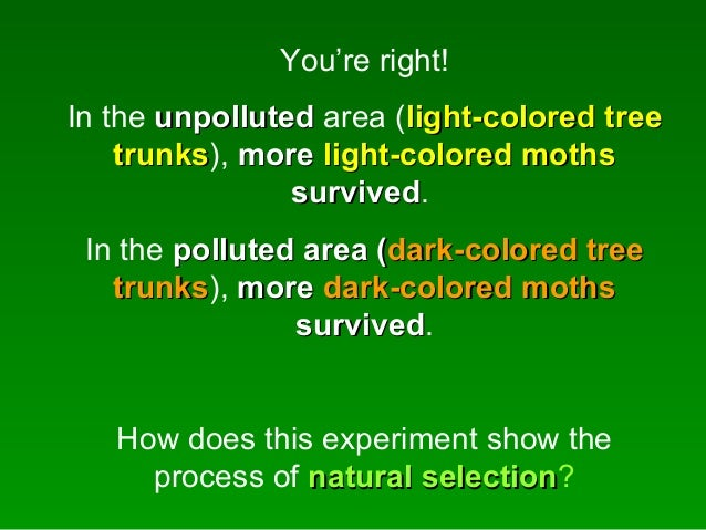 How Do Peppered Moths Show An Example Of Natural Selection