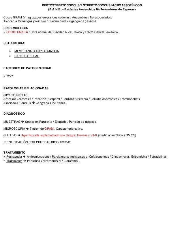 PEPTOSTREPTOCOCCUS Y STREPTOCOCCUS MICROAEROFÍLICOS (B.A.N.E. – Bacterias Anaerobios No formadores de Esporas) Cocos GRAM ...
