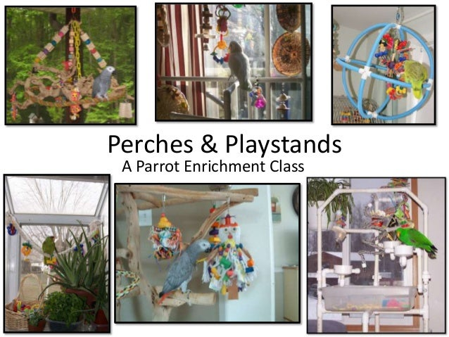 Perches & playstands
