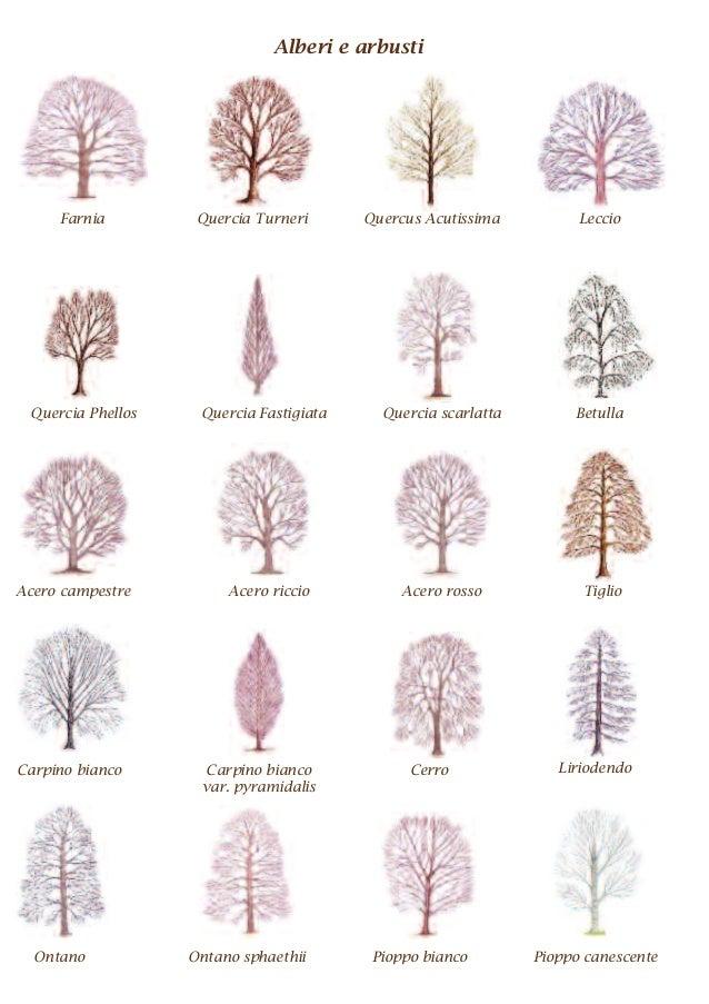 Parco san giuliano il percorso didattico degli alberi for Nomi di alberi sempreverdi
