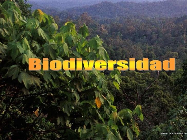 Biodiversidad <br />