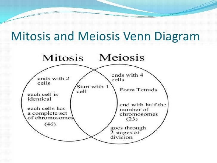 Mitosis Vs Meiosis Venn Diagram Worksheet Answer Key Ukran