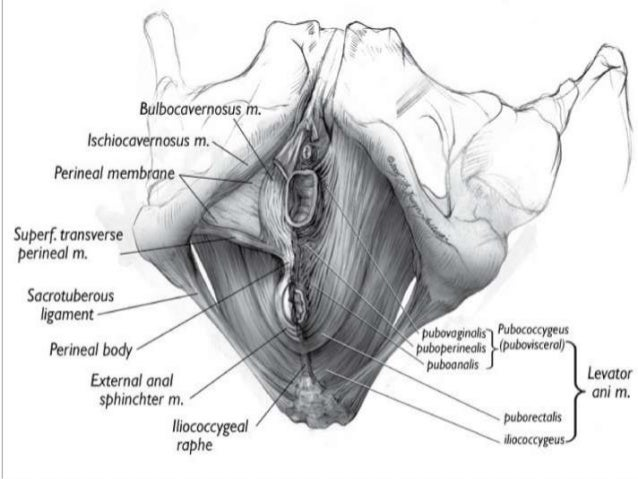Anal Lacerations In Girls
