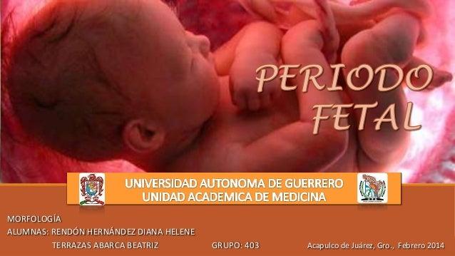 MORFOLOGÍA ALUMNAS: RENDÓN HERNÁNDEZ DIANA HELENE TERRAZAS ABARCA BEATRIZ GRUPO: 403 Acapulco de Juárez, Gro., Febrero 2014