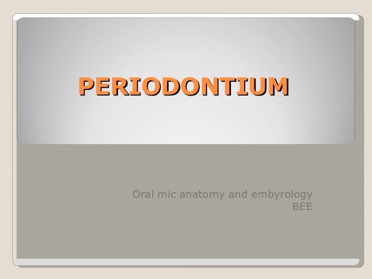 Periodontium brian