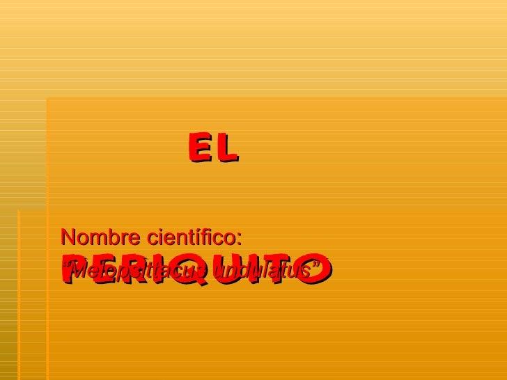 """EL   PERIQUITO Nombre científico:  """" Melopsittacus undulatus"""""""