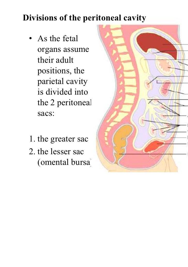 Peritoneal Cavity Definition Peritoneal Cavity Greater Sac