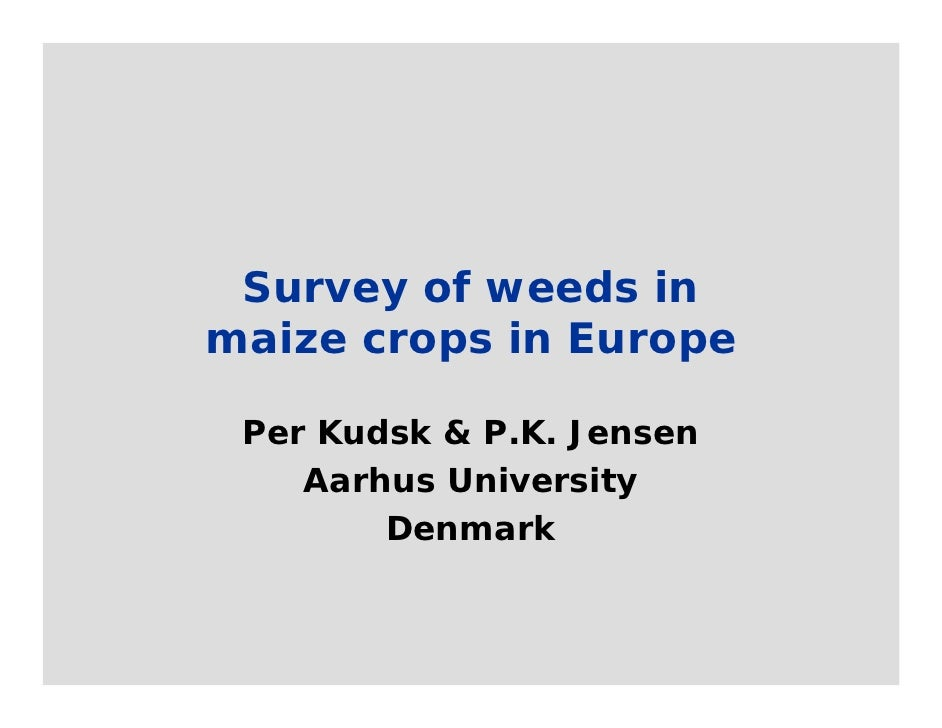 Survey of weeds inmaize crops in Europe Per Kudsk & P.K. Jensen    Aarhus University        Denmark