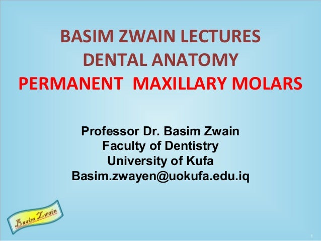 BASIM ZWAIN LECTURES DENTAL ANATOMY PERMANENT MAXILLARY MOLARS Professor Dr. Basim Zwain Faculty of Dentistry University o...