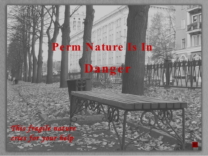 Perm Nature Is In  Danger This fragile nature cries for your help