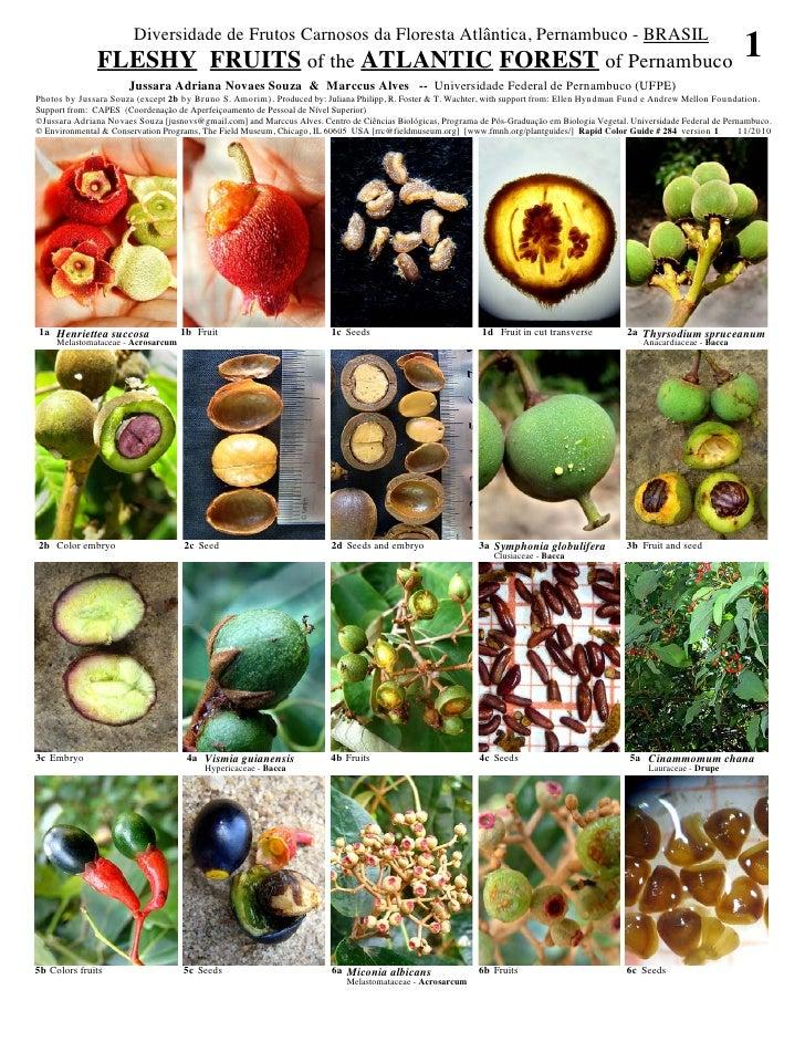 Diversidade de Frutos Carnosos da Floresta Atlântica, Pernambuco - BRASIL               FLESHY FRUITS of the ATLANTIC FORE...