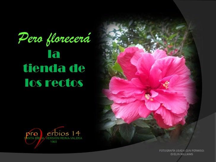 Pero florecerá    latienda delos rectosVpro          erbios 14 SANTA BIBLIA, VERSIÓN REINA-VALERA                 1960    ...