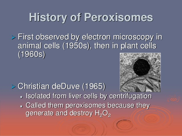 peroxisome in animal cell Peroxisomes can be thought of as the detoxification centres of the cell, they use specific enzymes to break down toxic substances and neutralize free radical.