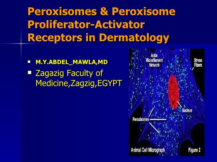 Peroxisomes in dermatology.ppt