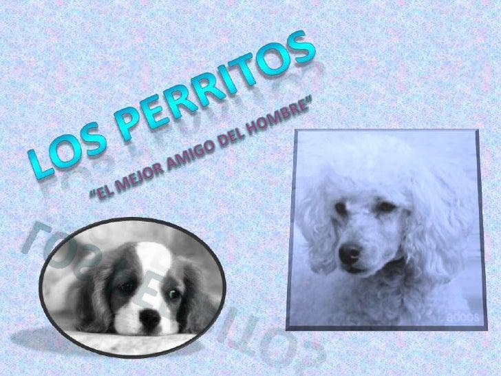 """Los perritos <br />""""EL MEJOR AMIGO DEL HOMBRE""""<br />"""