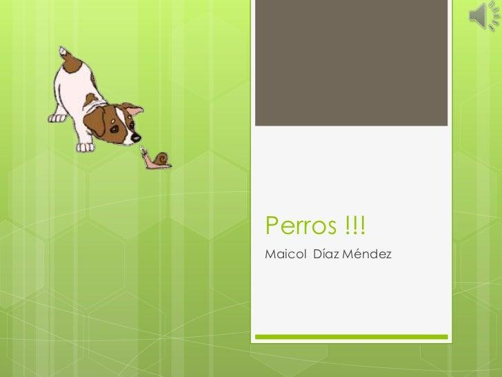 Perros !!!Maicol Díaz Méndez