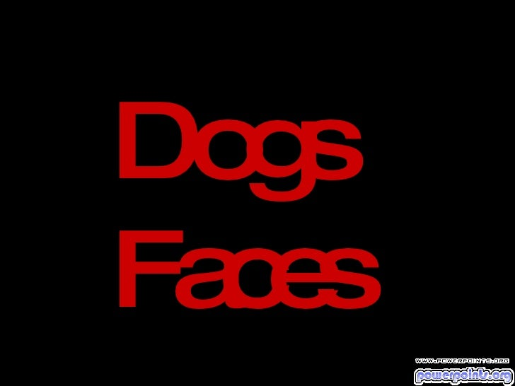 Dogs  Faces