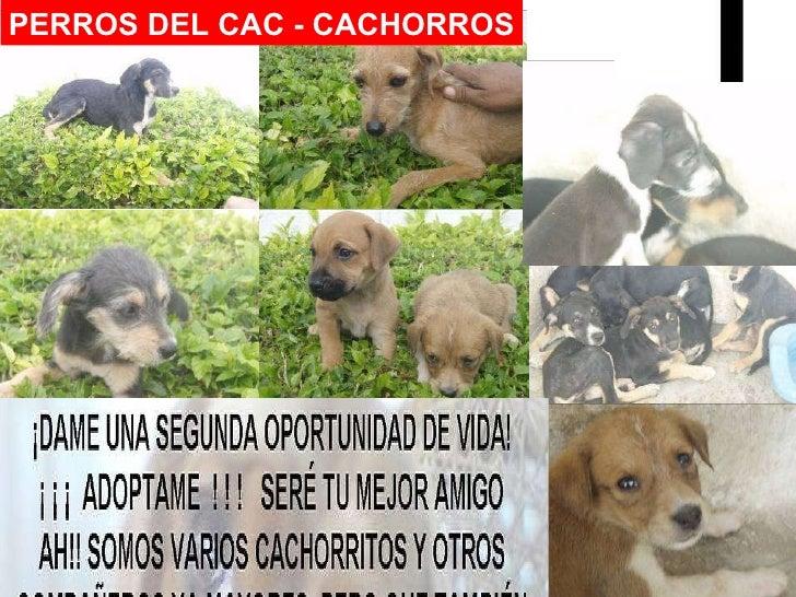 Bruno PERROS DEL CAC - CACHORROS