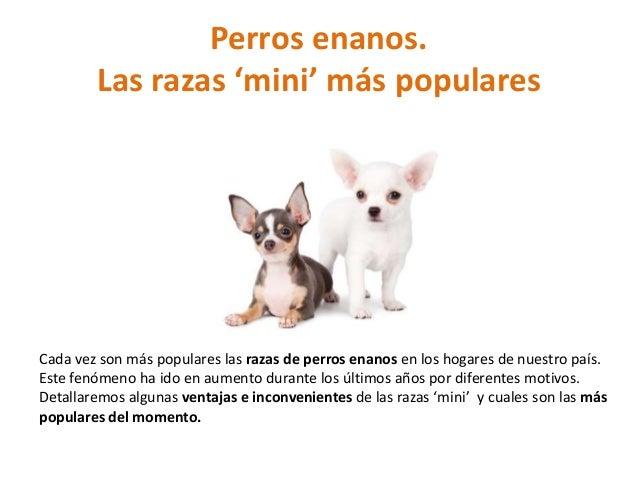 Perros enanos. Las razas 'mini' más populares Cada vez son más populares las razas de perros enanos en los hogares de nues...