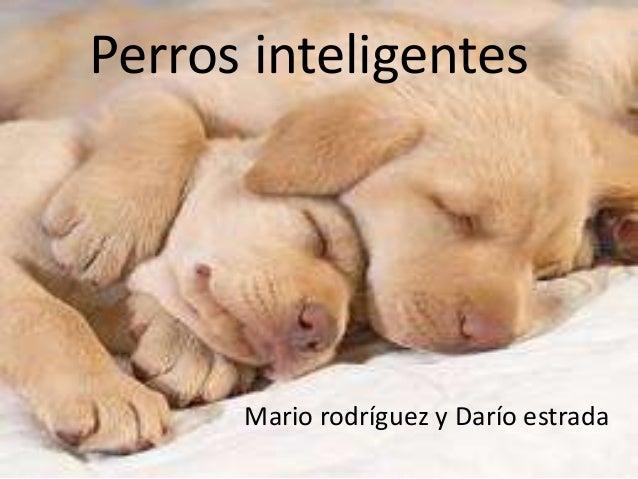 Perros inteligentes      Mario rodríguez y Darío estrada