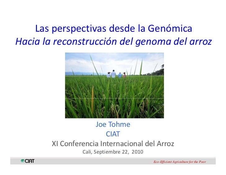 LasperspectivasdesdelaGenómica        p pHacialareconstruccióndelgenomadelarroz                     JoeTohme   ...
