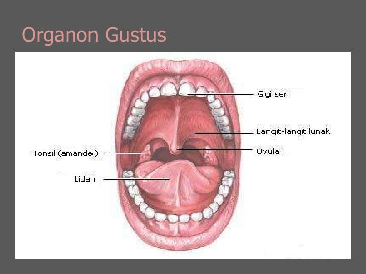 Organon Gustus