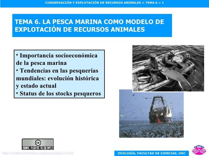 TEMA 6. LA PESCA MARINA COMO MODELO DE EXPLOTACIÓN DE RECURSOS ANIMALES <ul><li>Importancia socioeconómica de la pesca mar...