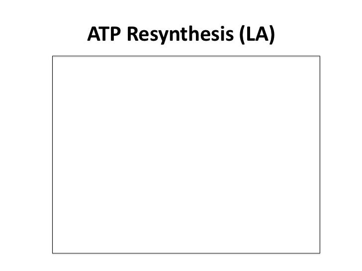 how is atp resynthesis