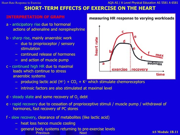 musculoskeletal acute response to exercise