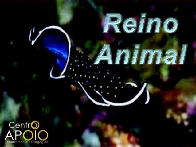 Reino Animal - Seres VivosSeres Vertebrados – São seres colunavertebral composta por vértebras ósseasou cartilaginosas. As...